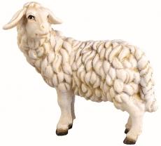 4357 Schaf schauend