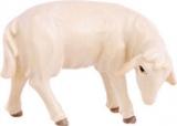 4552 Schaf fressend