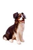 4585 Hirtenhund