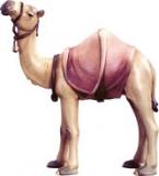 4595 Kamel stehend